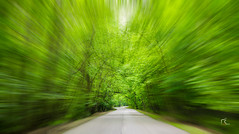 At the heart of spring! (Masoud KM) Tags: road tree nikon iran zoom zoomburst d7100