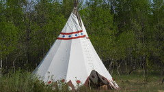FORT WHYTE ALIVE NATURE (Janalene) Tags: trees nature birds geese spring buffalo babies bees ducks eggs tipi nesting fortwhytealive
