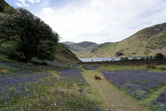 Crummock Water from Rannerdale (kailhen) Tags: park flowers lake nature water bluebells landscape view lakedistrict national cumbria fells stunning crummock cumbrian rannerdale