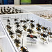 20160615 FEM Betancourt Beetle