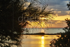 Tree silhouetted  against bay inlet at sunset (Nicholas Duell) Tags: trees sky cloud beach landscape twilight australia melbourne victoria coastal sunsetsunrise