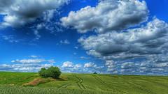 Summer landscape (RainerSchuetz) Tags: summer clouds agriculture field
