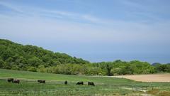 3Ikari Field Farm (anglo10) Tags: field japan kyoto seashore