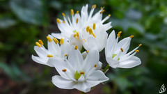 Flowers (mohammed.saidi13) Tags: light wallpaper white flower color macro green water photography focus day natur hapiness yellew
