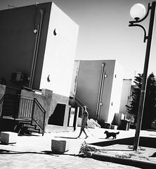 dog and girl (Ran Elmaliach) Tags: street people blackandwhite musician dog white black girl monochrome photography blackwhite legs gr performer ricoh ricohgr strret jendrix56 ranelmaliach