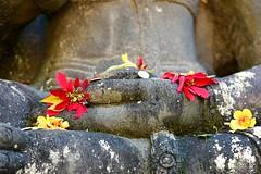 Offerings (Psychic Insights) Tags: flowers sculpture orange money green art love gardens coins buddha ngc australia harmony hindu hindi riches goodfortune mney