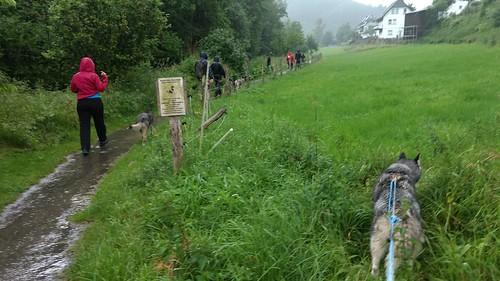 Im Dauerregen mit den Huskies