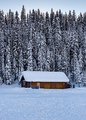 Lake Louise Cabin - Alberta, Canada (Damien Seidel) Tags: travel trees winter wild snow canada ice pine forest frozen cabin nikon adventure explore pines alberta banff wilderness lakelouise subzero icefieldsparkway bowvalley d810