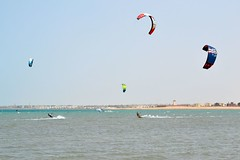 8_06_2016 (playkite) Tags: red sea summer kite june wind south egypt kiteboarding kitesurfing gouna kiting hurghada elgouna  2016          kitelessons