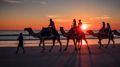 Camel train (jan_clewett) Tags: camels cablebeach westernaustralia beach beautiful colourful cameltrain