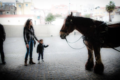 What's your name ? (kirilko) Tags: people horse macro ex portugal pessoas gente lisboa lisbon 28mm streetphotography streetphoto f18 cavalo dg aspherical canoneos5d sigma28mmf18exdgasphericalmacro httpssigma