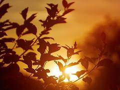End of a beautiful day (Petr Horak) Tags: sunset summer plant nature lens photography prime evening twilight flora time czechrepublic cze evenfall meyeroptikgrlitz stedoeskkraj novknn orestor100mmf28