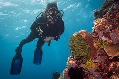 SCUBA Buddy (RubyWhatever) Tags: indonesia scuba buddy bandaislands