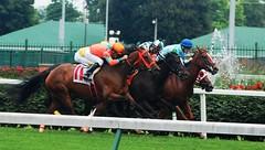 Churchill Downs (robgividenonyx) Tags: horses kentucky louisville churchilldowns racehorse