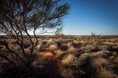 Desert mood (jotxam) Tags: red sun hot tree rot nationalpark sand desert oz australia lonely uluru australien sonne katatjuta baum downunder wste einsam heis flowersandplants