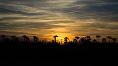 Golden Hour (bauscia99) Tags: street sunset sky italy sun nature clouds golden italia nuvole blu streetphotography palm hour paesaggi calabria paesaggio