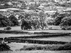 Keighley (tubblesnap) Tags: bw white black home monochrome stone wall countryside town yorkshire dry valley birthplace aire drystone