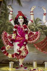 2016.06.30 (Darshan pictures ISKCON, Hungary) Tags: flowers red summer temple hungary religion budapest altar prabhupada darshan deities krisna iskcon gauranga gauranitai nityananda ekadasi