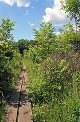 Appalachian Trail Boardwalk (dlberek) Tags: nature landscape newjersey swamp wetlands boardwalk appalachiantrail sussexcounty