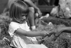 Hayride (F. Neil S.) Tags: blackandwhite fall film girl sunshine zeiss 35mm farm contax negative hayride aria blancetnoir selfdev bwfp