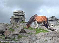Great Staple Tor & Pony, Merrivale, Dartmoor, Devon
