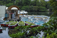 DP2Q3993lr (yoshitoshi ABe) Tags: sigma   dp2quattro 20160625