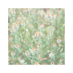 (mgarcacalvo) Tags: flowers naturaleza flores nature tamron90mm