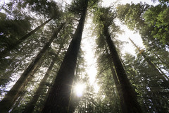 Sunrays through Sequoia National Prark (RigieNL) Tags: sunray sequoianationalpark sequoia