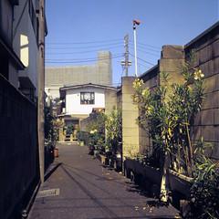 (  / Yorozuna) Tags: road plant flower japan tokyo alley alleyway     higashishinjuku            shinjukuward   wakamatsukawada