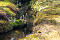 clingendael-7799 (Arie van Tilborg) Tags: japanesegarden hague thehague clingendael japansetuin clingendaelestate landgoedclingendael arievantilborg