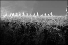 50 (Zeigen_was) Tags: voyage street travel viaje bw usa white black streets art blanco water fountain photography us dc washington calle drops nikon gallery noir y district brunnen negro columbia national blanche rue et reise reportage tropfen estados unidos reportaje schwarzweis strasen strase d300s ètatsunis