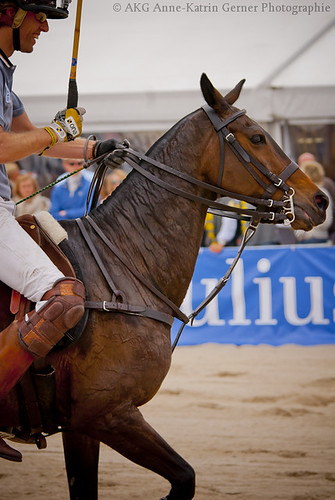 Beach Polo Sylt 3