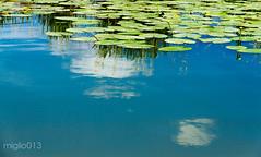 ninfee (miglio) Tags: lake water clouds lago nuvole 7d fiori oasi ninfee riservanaturale lagodimontepulciano eos7d canoneos7d efs1585mmf3556isusm