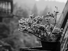 * (bhodaporel) Tags: trees mountain plant monochrome balcony pot