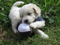 CIRO 38 DIAS (27) (OBJETOS MUUTTAA) Tags: dog naturaleza canon vida perros animales mascotas seres seresvivos