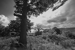 Aug13 18 130 danbury lakes country park (dwimagesolutions) Tags: england bw essex danbury nikond200 sigma1020mmf456
