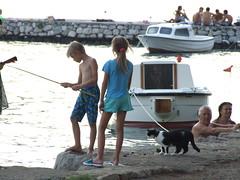 Fishing together (Monika Kostera (urbanlegend)) Tags: cats montenegro kotor