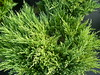 "Andora Juniper • <a style=""font-size:0.8em;"" href=""http://www.flickr.com/photos/101656099@N05/9736793770/"" target=""_blank"">View on Flickr</a>"