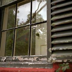 Window Watching (Ikoflex)