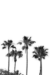 Demon Days (K!DH) Tags: trees white black palm minimal
