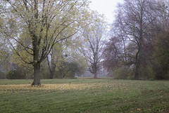 am Kiessee (goestern) Tags: november autumn trees leaves laub herbst landschaft bume