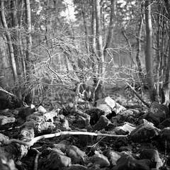 remains of a ringwall (my analog journey) Tags: mov 500cm fujineopanacros100 planar2880cft ©bymikemov