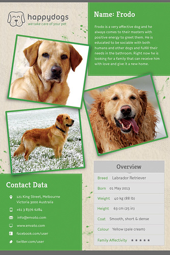 Pet Flyer Gallery Green Version