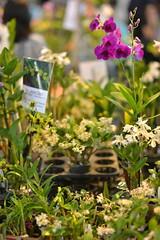 D60_2023 (Axelhouston) Tags: orchid samyang a99xel 1485mm