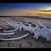San Ignacio Whale Bone Sunset ? Baja California, Mexico