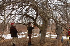 "Apple Pruning: A Group Effort <a style=""margin-left:10px; font-size:0.8em;"" href=""http://www.flickr.com/photos/91915217@N00/13528508604/"" target=""_blank"">@flickr</a>"