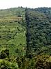 Uganda-18-012-deforestation-Credit D. Sheil (darwin_initiative) Tags: poverty mountain forestry wildlife conservation darwin environment uganda development biodiversity defra dfid