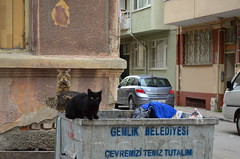 Bad Boys - Street Cats (Ali RZGAR) Tags: street boys cat bad kedi sokak serseri p