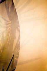 (Artibani Francesco) Tags: light orange reflection film palms photography personal lostdays francescoartibani