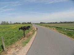 2014-0792 (schuttermajoor) Tags: nederland hond che buren paard 2014 airedaleterrier tielerwaardwandelroute